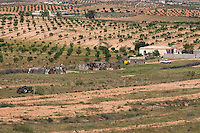 Sidi al-Gharib, near Tarhouna, Libya - Farm, with Olive Trees in Distance