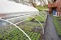 Organic vegetable seedlings, Singing Frogs Farm