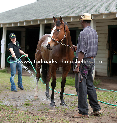 Irv Naylor's latest import, Nearby, gets a bath before the Carolina Cup.