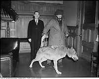 File Photo circa 1945 - Joe La Flamme, the Moose man in government office with a wolf on a leash