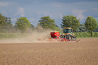 Drilling vining peas in dry dusty conditions - May, South Lincolnshire