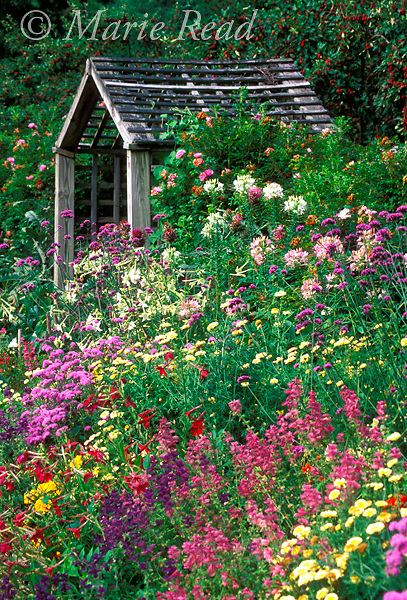 An arbor in a summer garden surrounded by flowering tansy, coreopsis, cleome, salvia, nicotiana, New York, USA<br /> Slide # GWF-10