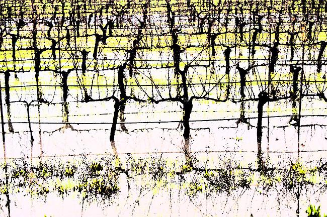 Napa Valley vineyard after heavy rain