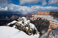 Snow covered tree at view point, Grand Canyon national park, Arizona, USA