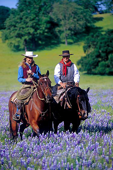 Cowboy and cowgirl riding horseback in a wildflower field. Santa Margarita, California
