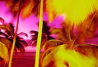 Surreal palm trees, Puerto Rico