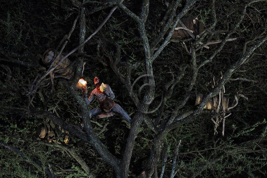 In the land of the Bana tribe, the harvest of the hive trees takes place at nightfall by moonlight.///Dans le pays de la tribu Bana, les récoltent des arbres à ruche se déroulent à la tombé de la nuit à la lumière de lune.