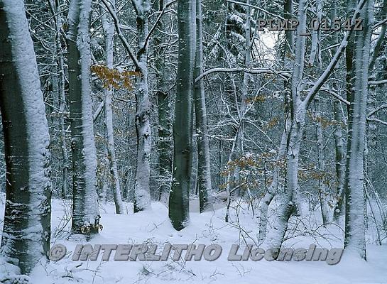 Marek, CHRISTMAS LANDSCAPES, WEIHNACHTEN WINTERLANDSCHAFTEN, NAVIDAD PAISAJES DE INVIERNO, photos+++++,PLMP0154Z,#xl#