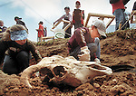 Mira Cat Dig #01/CMYK.PV WK 19/2003. Photo:Tom Underhill..Holy Cow Skull!!!!.