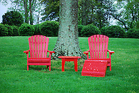 Red lawn chairs beaneath tree in Charlottesville, Virginia