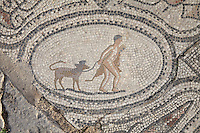 Roman mosaic of Hercules capturing and returning his pet Cerberus, a three-headed dog with a snake tail, his twelfth labour, from the Labours of Hercules mosaic in the House of the Labours of Hercules, 1st century AD, Volubilis, Northern Morocco. Volubilis was founded in the 3rd century BC by the Phoenicians and was a Roman settlement from the 1st century AD. Volubilis was a thriving Roman olive growing town until 280 AD and was settled until the 11th century. The buildings were largely destroyed by an earthquake in the 18th century and have since been excavated and partly restored. Volubilis was listed as a UNESCO World Heritage Site in 1997. Picture by Manuel Cohen