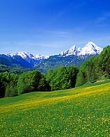 DEU, Deutschland, Bayern, Oberbayern, Berchtesgadener Land, Blumenwiese und der schneebedeckte Watzmann (2.713 m) | DEU, Germany, Bavaria, Upper Bavaria, Berchtesgadener Land, flower meadow and snow covered Watzmann mountain (2.713 m)
