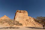 Israel, the Negev desert. Acacia trees in Wadi Paran