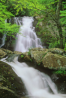 Spruce Flats Falls flows full in Spring, near Tremont in Great Smoky Mountains National Park in Tennessee