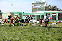 January 17, 2015:  I'm a Chatterbox ridden by Florent Geroux leads the Silverbulletday Stakes  at the New Orleans Fairgrounds course. Steve Dalmado/ESW/CSM