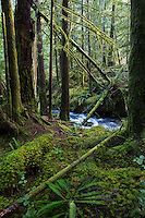 TA46955-D. Lush temperate rainforest in the Skookumchuck Narrows Provincial Park on the Sechelt Peninsula along the Sunshine Coast. British Columbia, Canada.<br /> Photo Copyright &copy; Brandon Cole. All rights reserved worldwide.  www.brandoncole.com
