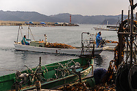 A boat heads returns to port, harvesting wakame at dawn, Awata fishing port, Naruto, Tokushima Prefecture, Japan, February 4, 2012.
