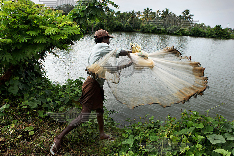 A fisherman catching shrimps on a fish farm. It is estimated that over 65,000 hectares of Kerala's southern coastal backwaters are under cultivation. India's shrimp industry is a major backbone of the Indian economy. Most farms are natural operations, relying on larvae that flow in from the sea. Farmers concentrate on shellfish production for about six months per year, through the monsoon season when heavy rains freshen the brackish waters and make conditions ideal for catching and raising penaeid prawns.