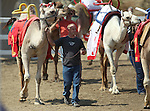 Rich Martin particpates in the opening parade at the International Camel Races in Virginia City, Nev., on Friday, Sept. 9, 2011. .Photo by Cathleen Allison