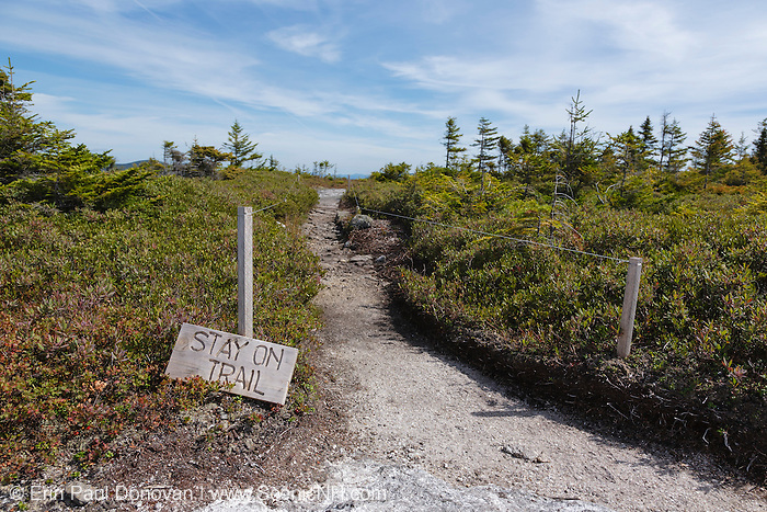 Stay on trail sign along the Baldface Circle Trail during the summer months in the White Mountains, New Hampshire.