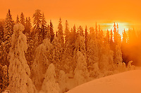 Boreal forest at sunrise in winter at Pisew Falls<br /> Pisew Falls Provincial Park<br /> Manitoba<br /> Canada