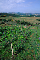 Beautiful vineyards of romantic Tuscany Italy in Chianti Distric