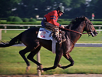 Horse racing; racehorse; Thoroughbred; racetrack, Risen Star, Secretariat, 1988 Belmont Stakes, Jimmy Nichols, Louis Roussel
