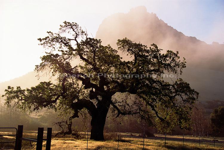 Pacheco Pass   CALIFORNIA, Diablo Range