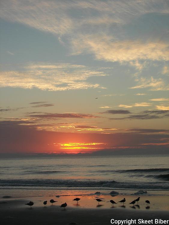 Birds on beach at sunrise