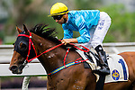 HONG KONG - MAY 04:  Joao Moreira of Portugal riding Tour De Four after winning the Admiralty at Sha Tin racecourse on May 4, 2014 in Hong Kong, Hong Kong.  Photo by Aitor Alcalde / Power Sport Images