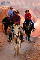 park visitors enjoying horse, Equus ferus caballusback riding tour, Bryce Canyon National Park, Utah, USA