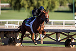 OCT 29: Breeders' Cup Turf entrant United, trained by Richard E. Mandella,  at Santa Anita Park in Arcadia, California on Oct 29, 2019. Evers/Eclipse Sportswire/Breeders' Cup