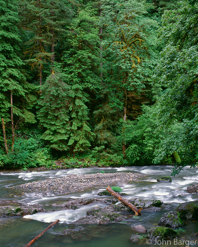 67ORCAC_053 - USA, Oregon, Willamette National Forest,  South Santiam River and lush old growth forest.