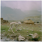 Wakhan - Spotted