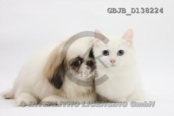 Kim, ANIMALS, fondless, photos(GBJBD138224,#A#) Tiere ohne Fond, animales sind fondo