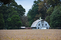 An old barn rises above a field near St. Michael's on Maryland's Eastern Shore.