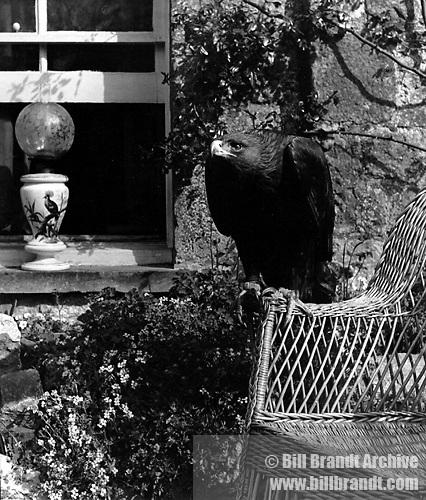 Eagle and window