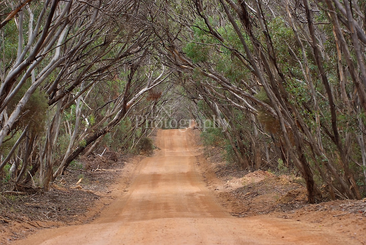 The long road to Hanson Bay Kangaroo Island South Australia the beauty and texture from the color and trees