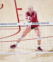 STANFORD, CA - November 3, 2018: Kathryn Plummer,  at Maples Pavilion. No. 1 Stanford Cardinal defeated No. 15 Colorado Buffaloes 3-2.