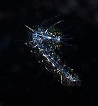 Scaled Worm Larva