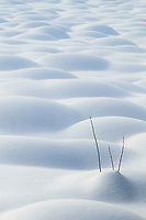 A branch sticks out of the snow covered tussocks on the tundra, Arctic, Alaska