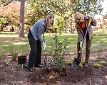 October 26, 2017. Raleigh, North Carolina.<br /> <br /> Audubon North Carolina Executive Director Heather Hahn, left, and NC First Lady Kristin Cooper planted a Viburnum together as part of the garden dedication ceremony. <br /> <br /> A new garden designed by Ben Skelton containing native Plants For Birds was dedicated at the North Carolina Executive Mansion.