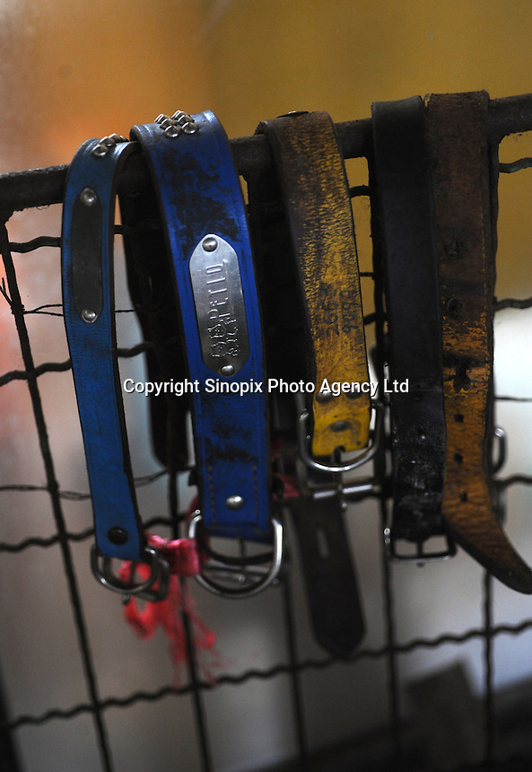 Dog collars from gassed animals  at Chiba Hokenjo, or animals collection center that gasses some 7,0000 pets using carbon dioxide  annually.  Japan kills over 200,000 cats and dogs annually by gassing them with carbon dioxide...photo by  / Sinopix............