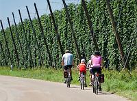 Deutschland, Bayern, Familie beim Radausflug durch das Hopfenanbaugebiet Hallertau (Holledau) | Germany, Bavaria, family on bikes through hop-planting area Hallertau (Holledau)