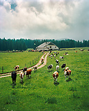 SWITZERLAND, Couvet, a farm and cows on the outskirts of Couvet, Jura Region