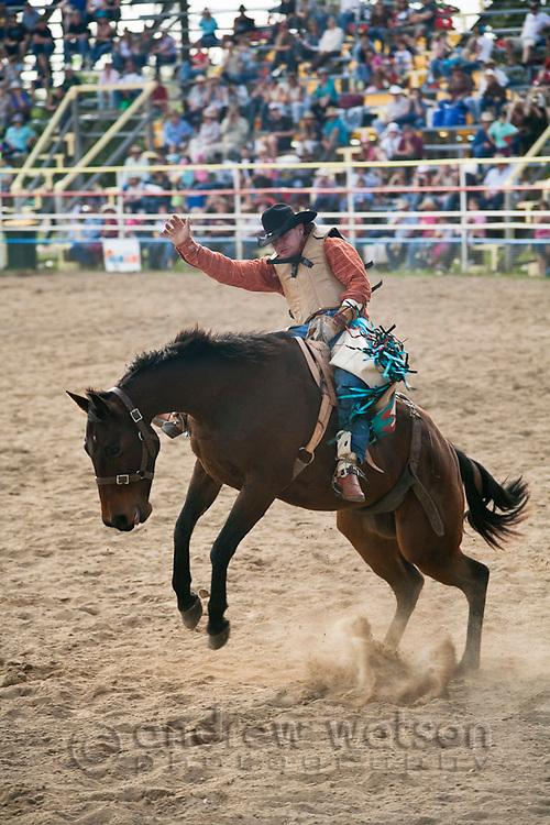 Bareback bronc rider in action at Mareeba Rodeo.  Mareeba, Queensland, Australia