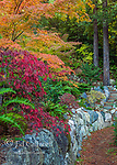Japanese Maple Garden, Acer Palmatum, Fern Canyon Garden, Mill Valley, California