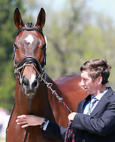 LEXINGTON, KY - April 26, 2017. #2 Parker and James Alliston from Great Britain at the Rolex Three Day Event First Horse Inspection at the Kentucky Horse Park.  Lexington, Kentucky. (Photo by Candice Chavez/Eclipse Sportswire/Getty Images)