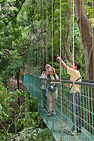 Canopy bridge walk through Carara Park,  Costa Rica, Central America.
