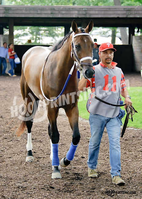 Comforter in the paddock before winning at Delaware Park on 7/30/14 earning Scott Lake his 5500th training win